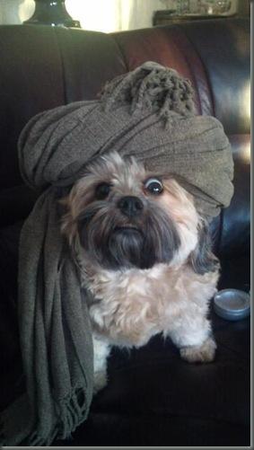 Jihad dog
