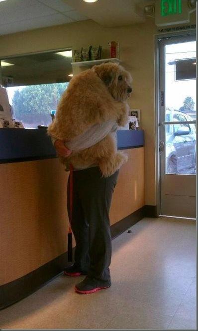 Dog Vets
